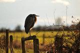 BIRD WATCHING DELTA