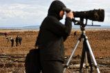 SNOWY OWL PHOTOGRAPHERS
