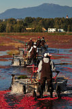 05 October 2012 - Workers use harvesting machines in a flooded field at a farm owned by Richberry Group of Companies, reportedly the largest grower in Canada, in Richmond, B.C., Canada. Credit: Adrian Brown - N49Photo.