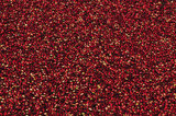 05 October 2012 - Cranberries are seen floating in a flooded field at a farm owned by Richberry Group of Companies, reportedly the largest grower in Canada, in Richmond, B.C., Canada. Credit: Adrian Brown - N49Photo.