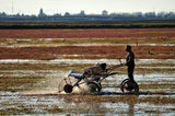 05 October 2012 - A worker uses a harvesting machine in a flooded field at a farm owned by Richberry Group of Companies, reportedly the largest grower in Canada, in Richmond, B.C., Canada. Credit: Adrian Brown - N49Photo.