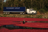 05 October 2012 - A worker pulls a boom while corralling cranberries in a flooded field at a farm owned by Richberry Group of Companies, reportedly the largest grower in Canada, in Richmond, B.C., Canada. Credit: Adrian Brown - N49Photo.