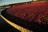 CRANBERRY HARVEST RICHMOND