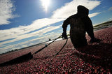 EAGLE VIEW FARMS LTD. CRANBERRY HARVEST
