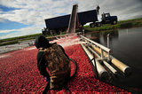 29 October 2012 - A worker pulls a boom while corralling cranberries in a flooded field at Eagle View Farms Ltd., in Delta, B.C., Canada. Credit: Adrian Brown - N49Photo.