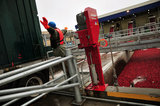 22 October 2012 - A worker directs a tractor trailer load of cranberries as it is parked in an unloading area, at the brand new, state-of-the-art Ocean Spray of Canada Ltd., Richmond Receiving Station, in Richmond, B.C., Canada. Credit: Adrian Brown - N49Photo.